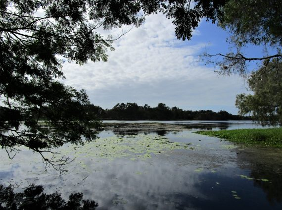 Blog 4 - Emma Jeskanen: Beautiful walks on Ross River Parkway